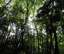 森を育て、生き物増やそうプロジェクト!5月25日から受付開始!
